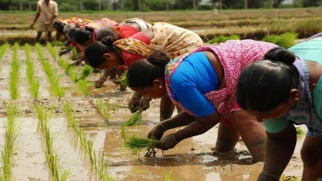 Corona महामारी से अछूता रहा कृषि क्षेत्र, 1104 लाख हेक्टेयर में हुई इस बार खरीफ फसलों की बुवाई