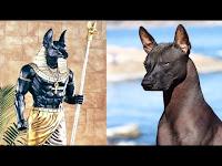Türleri Antik Çağlardan Beri Devam Eden 10 Köpek Irkı - Bunlar KAÇMAZ!