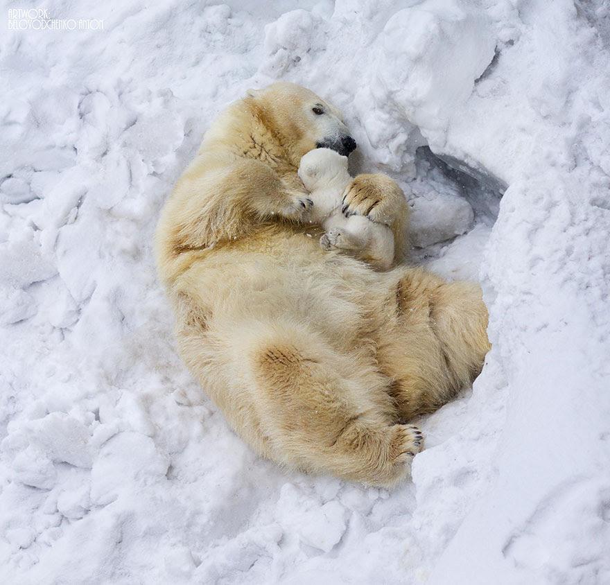 http://www.boredpanda.com/cute-animal-parenting/?image_id=animal-parents-3-2.jpg