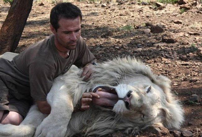 Кевин Ричардсон держит льва за язык. Фото