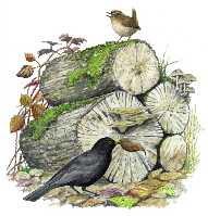 a garden log pile