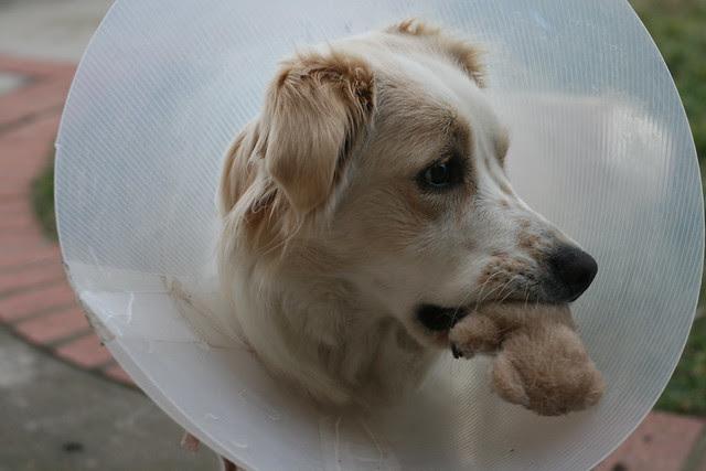 Cidney the Dog AKA Conehead
