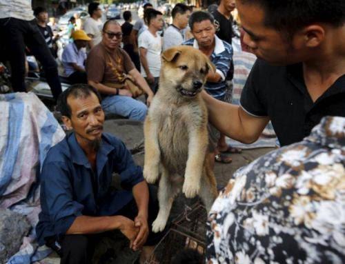 玉林狗肉節殘暴 市民聲明斥「偽文化傳統商業行為」