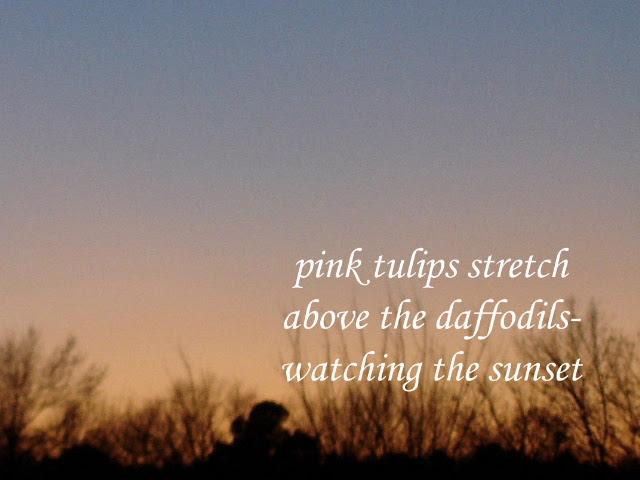 pinktulips2