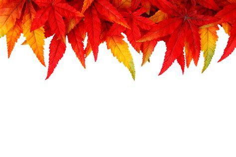 foto gratis sfondo autunno foglie immagine gratis su