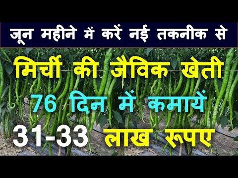 जून महीने में करें मिर्ची की जैविक खेती 76 दिन में कमायें 31-33 लाख रूपए...