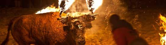 PACMA denuncia el maltrato animal en la celebración del 'Toro Jubilo' de Medinaceli  (Imagen: PACMA)