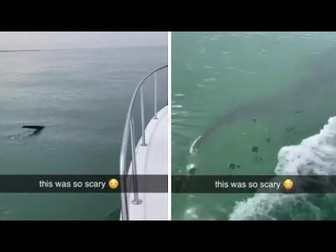 El raro tiburón azotador nada junto a un bote a menos de una milla de la costa