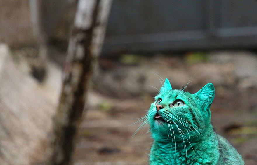 green-cat-varna-bulgaria-1