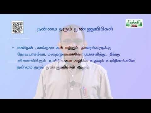 11th Agricultural Science பயிர்களைத் தாக்கும் நோய்கள்  அலகு 12 பகுதி Kalvi TV