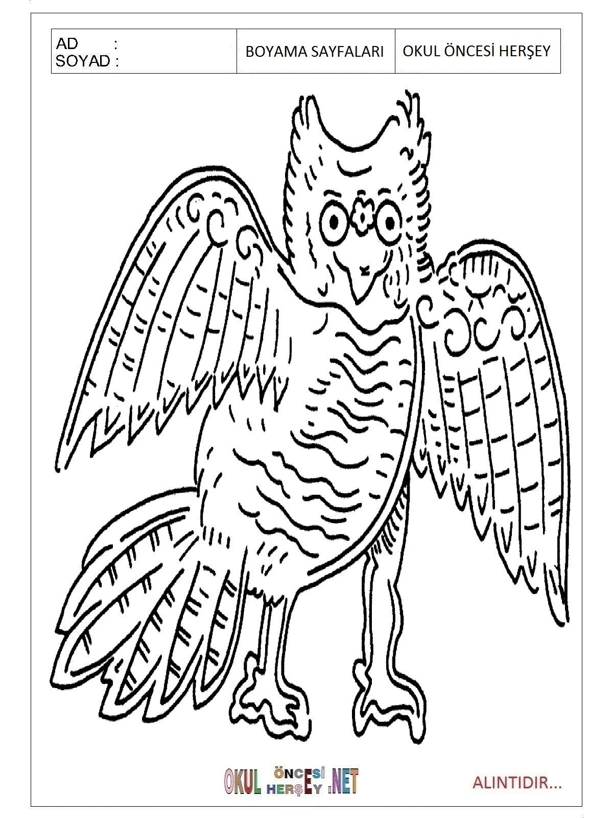 Baykuş Boyama Sayfaları
