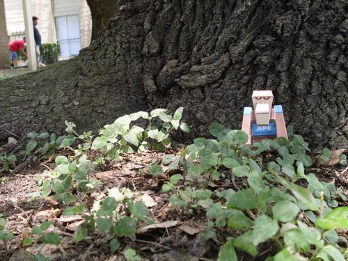 ptsf julian 02 - my tree