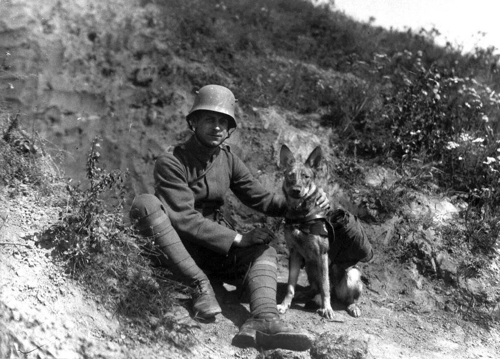 Os animais também lutaram na Primeira Guerra Mundial 44