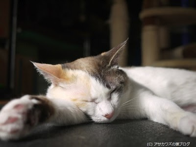 暖かいので寝てるだけ