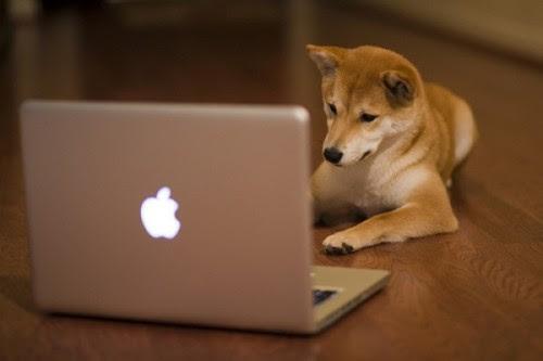 Diferença ebtre blog e site