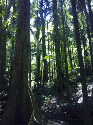 Maiala Rainforest