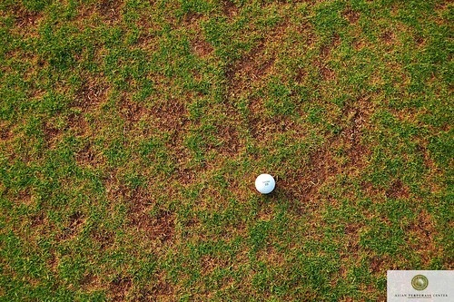 Turfgrass Disease Updates For Golf Courses More About