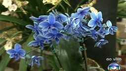 Paulistas podem conferir mostras de bromélias e orquídeas na capital