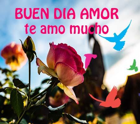 Rosas De Amor Buenos Dias Rosas De Amor