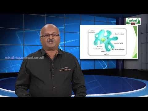 ஆய்வுக் கூடம் Std8 Science அறிவியல் நுண்ணுயிரியல் பகுதி 2 Kalvi TV