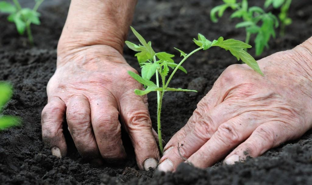 Herkes_için_bahçecilik