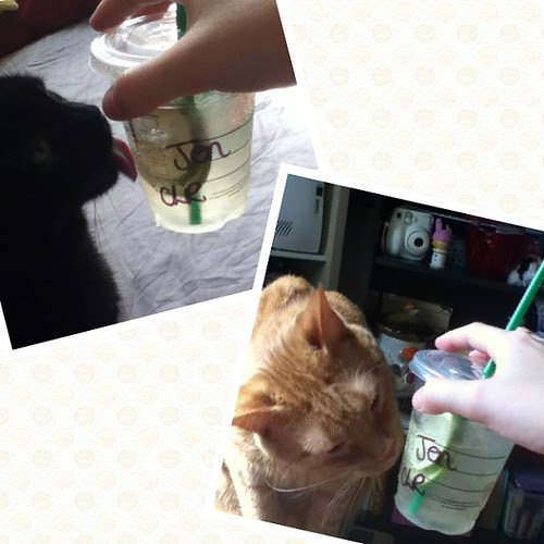 The kitties are enjoying my lime refresher as much as me <3 #Starbucks #catsofinstagram