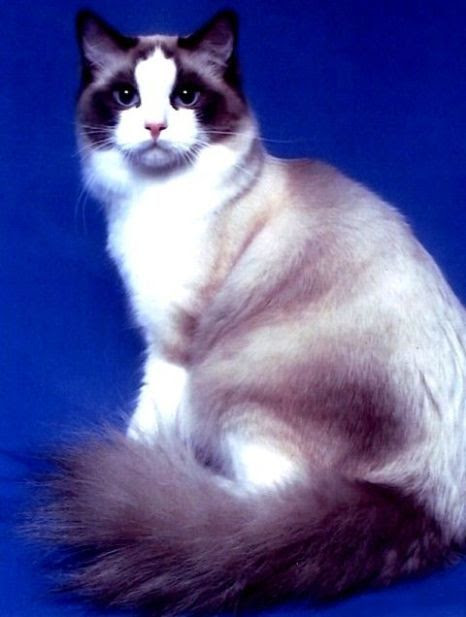 Nomor Kucing Kawin Flauschige Katzen