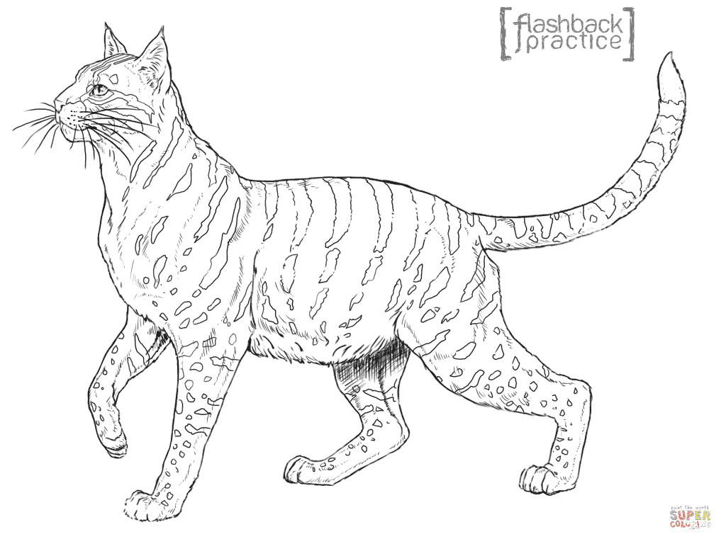 Andean Mountain Wildcat coloring page | Free Printable ...