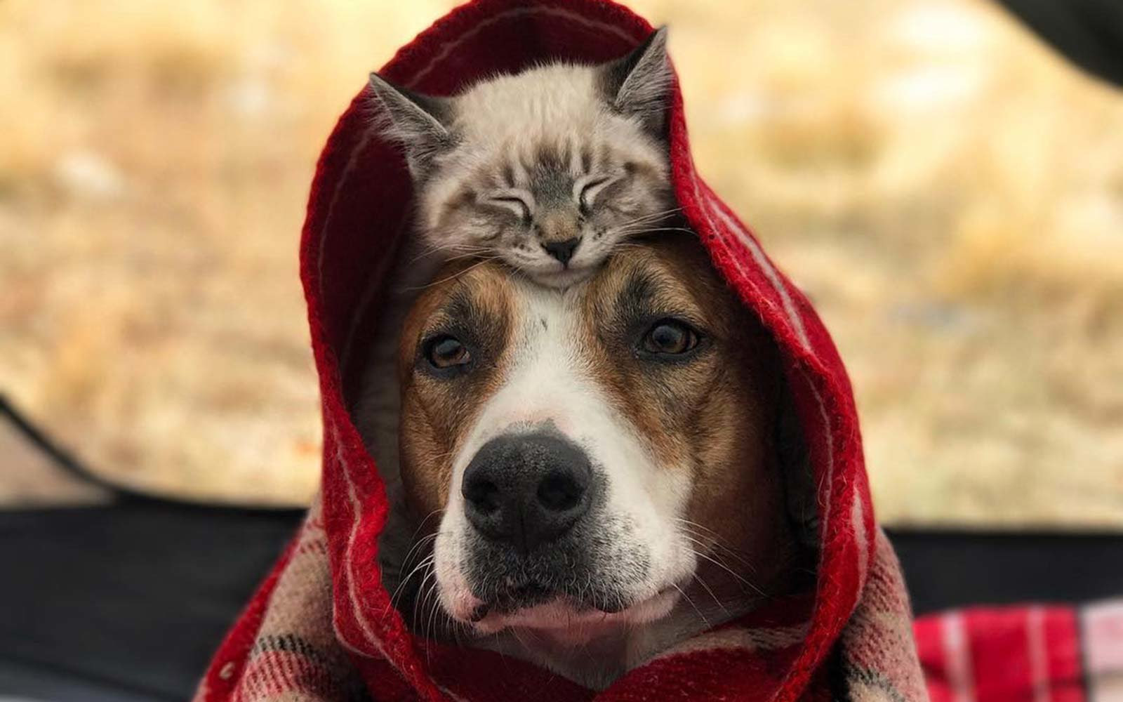 This Dog and Cat Are Best Friends and They're Traveling ...