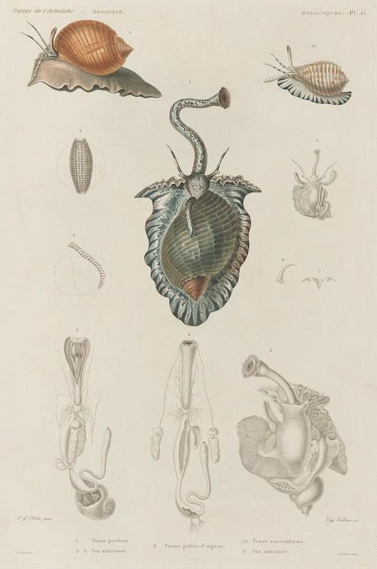 Voyage de la Corvette (atlas) by Jules Dumont d'Urville, 1833 89