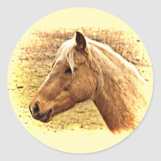 Golden Brown Horse in Sun Stickers