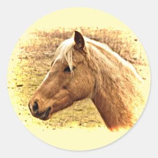 Golden Brown Horse in Sun Stickers