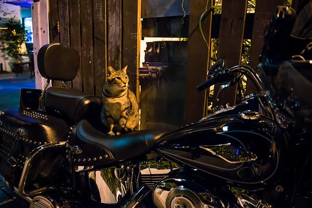 淡水的貓車友