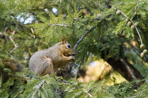 Squirrell092908_sm