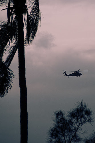 heli and palms small