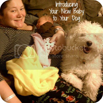 Tips to Introduce New Baby and Dog