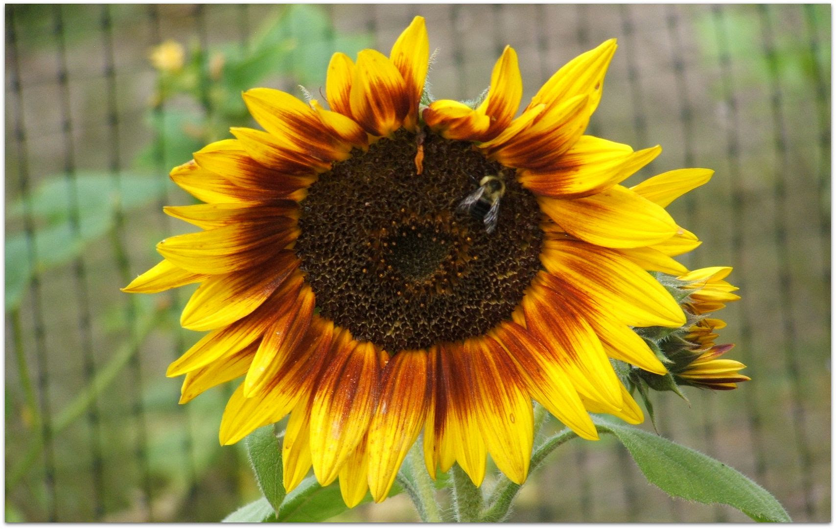 by Angie Ouellette-Tower for http://www.godsgrowinggarden.com/ photo DSCF9063_zpsh7tgykcw.jpg