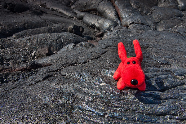 rover, prancing on black lava rock