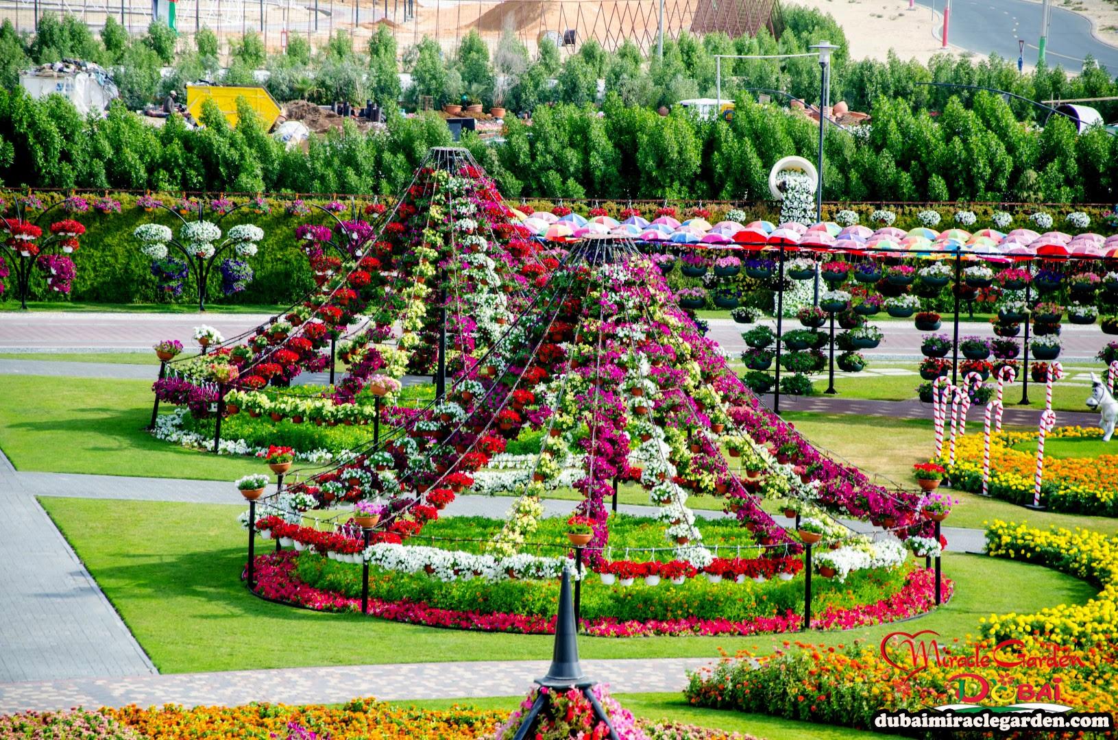 Dubai Miracle Garden 32