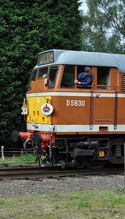 Tan coloured Class 31