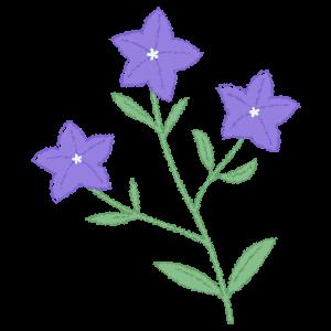 桔梗のイラスト6 花植物イラスト Flode Illustration フロデイラスト