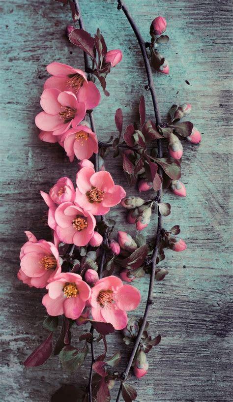 wallpaper iphonebeautypink flowers wallpapers iphone