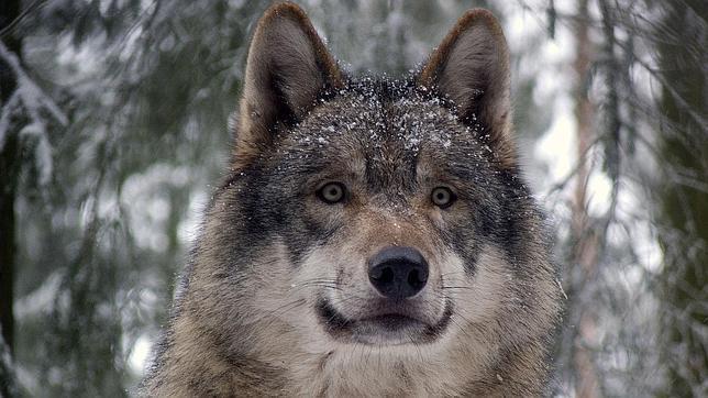 ¿Los perros se comunican a través de la mirada?