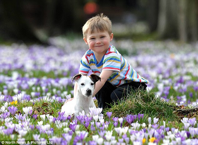 Warm winter weather: Alex Kingston, aged five, with his pet dog Alfie, enjoys the remarkable warm weather in Darlington, County Durham