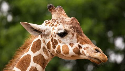 Does Every Giraffe Have Their Own Pattern of Spots?   Animals   mom.me