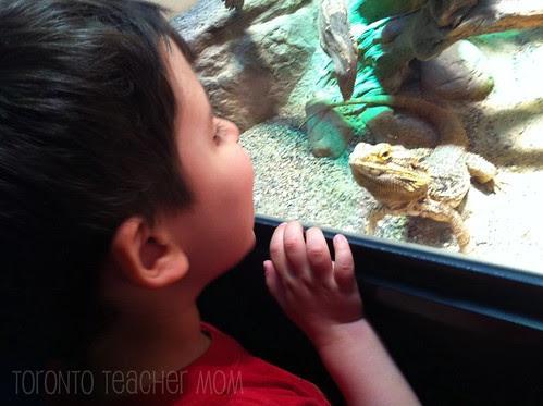 Reptiles - Ontario Science Centret