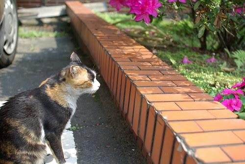 賞花.小花