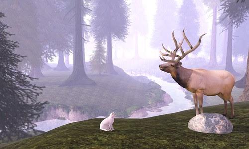 Where's Dim Sum? #125 - Elk in the taiga