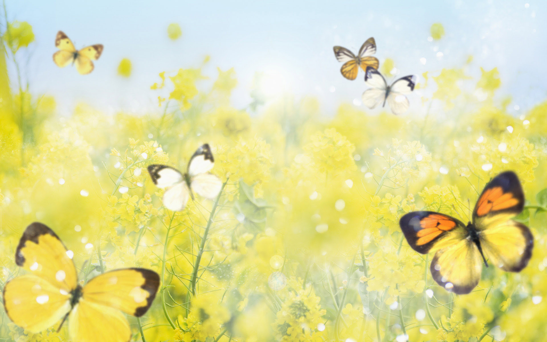 30 COLORFUL BUTTERFLY WALLPAPERS FREE TO DOWNLOAD ...