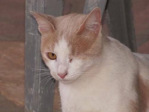 Mr. N., the rescue cat